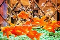 Дзеркальна плитка ромбами на фоні акваріуму